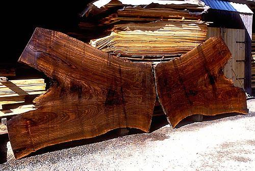 File de lemn Bastogne - combinatie naturala intre doua specii diferite de castan de pe continentul american