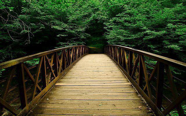 lemnul din padure si podul