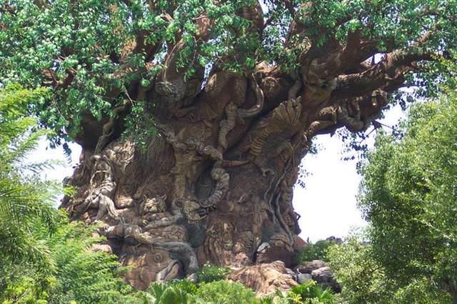 indian copac