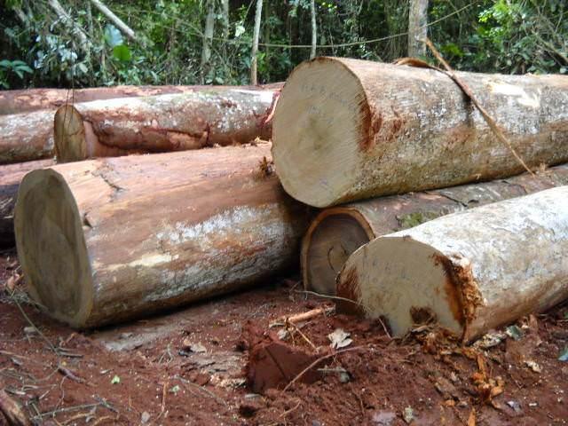lemn exotic - esente exotice