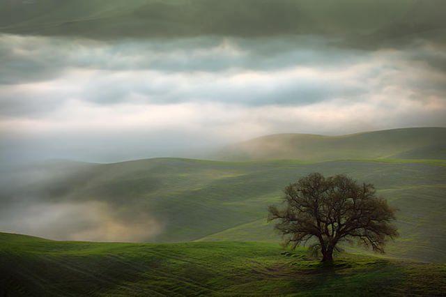 "<img src=""https://www.stejarmasiv.ro/wp-content/uploads/2013/02/11162006-md.jpg"" alt=""pictură natură"" />"