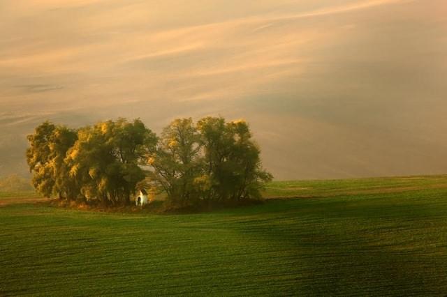 "<img src=""https://www.stejarmasiv.ro/wp-content/uploads/2013/02/12630852-md.jpg"" alt=""pictură natură"" />"