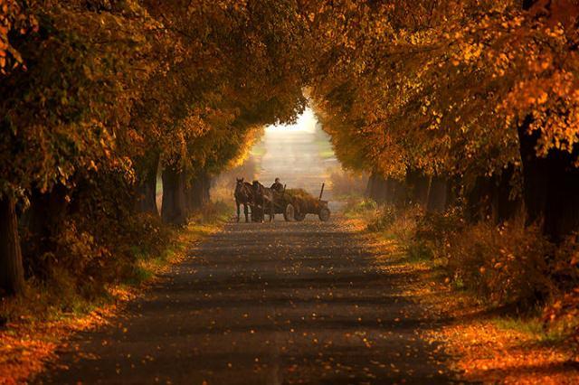"<img src=""https://www.stejarmasiv.ro/wp-content/uploads/2013/02/14528213-md.jpg"" alt=""peisaje natură"" />"