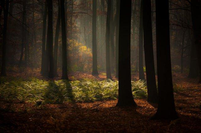 "<img src=""https://www.stejarmasiv.ro/wp-content/uploads/2013/02/14582873-md.jpg"" alt=""pictură pădure"" />"