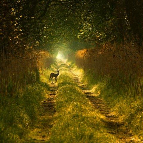 "<img src=""https://www.stejarmasiv.ro/wp-content/uploads/2013/02/15669093-md.jpg"" alt=""căprioara pădure"" />"