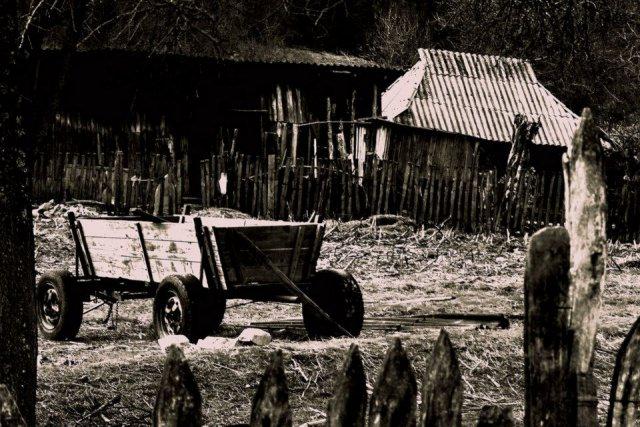 poze alb negru