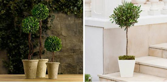 mini copacei in apartament - parfumul designului interior - bonsai
