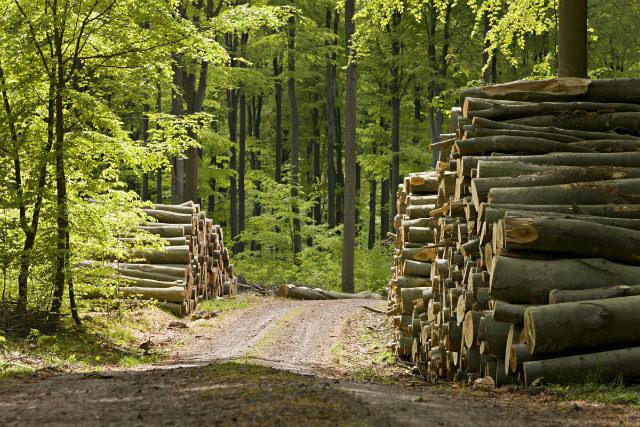 lemn taiat din padure România