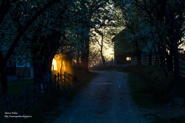 fotografii de Marius Podină