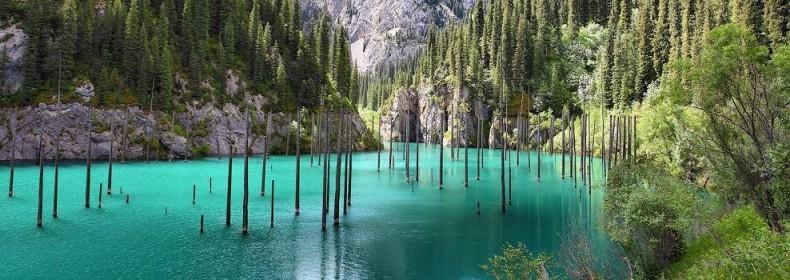 padure subacvatica - padurile scufundate