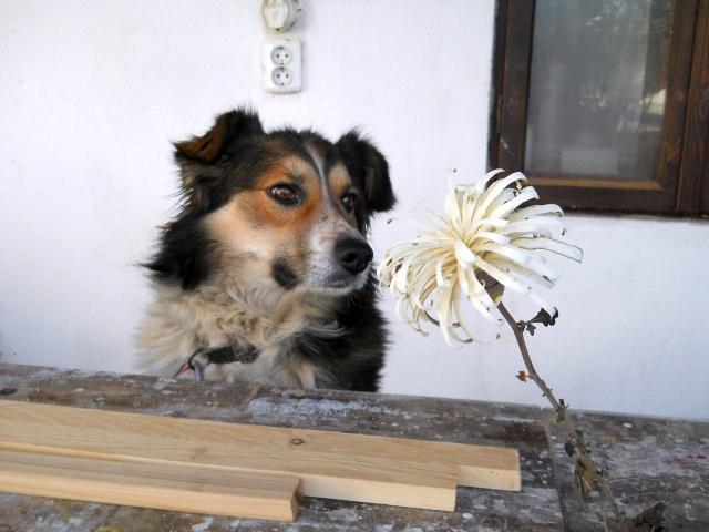 bricolaj lemn - flori de lemn