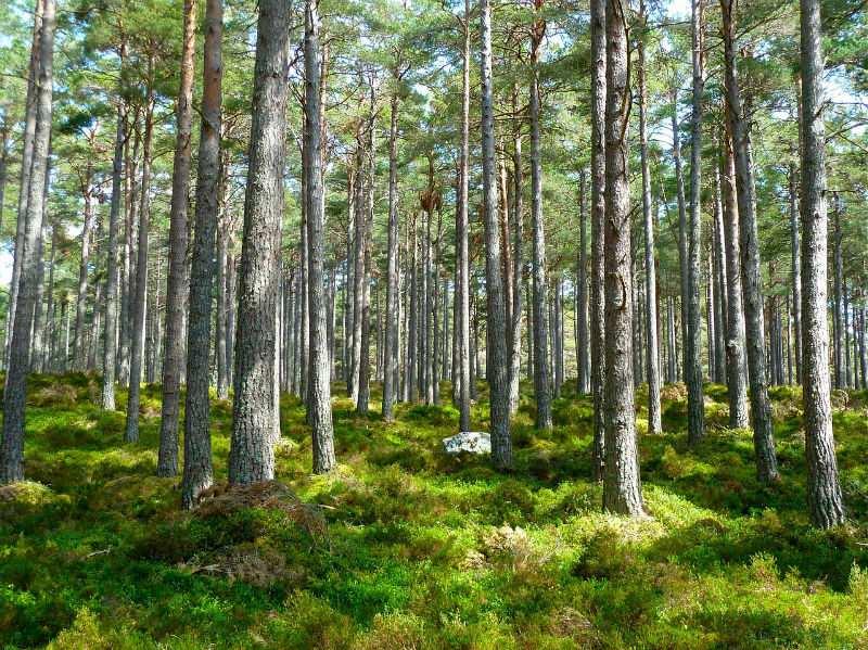 padure copaci stejar (1)