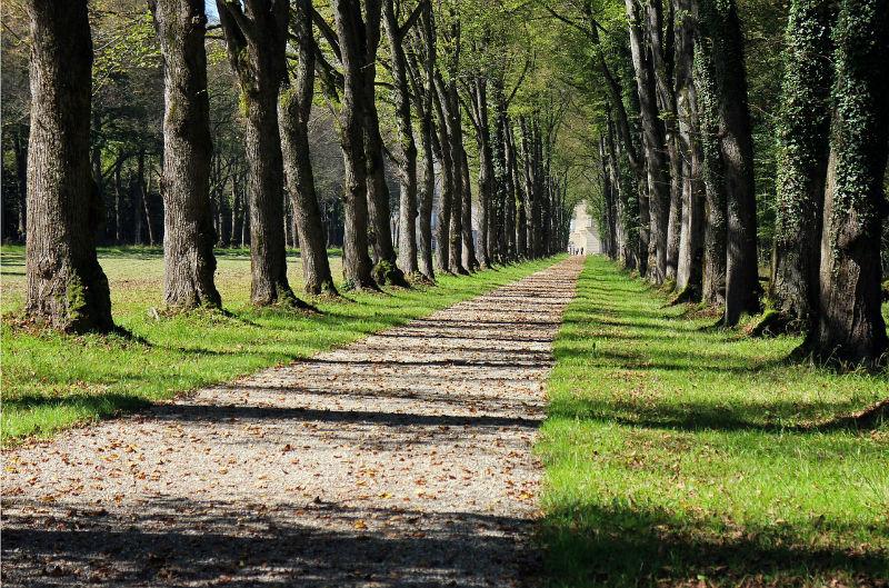 padure copaci stejar (2)