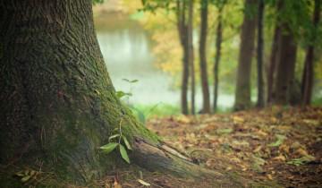 Rezultatele publicate pentru Inventarul Forestier National