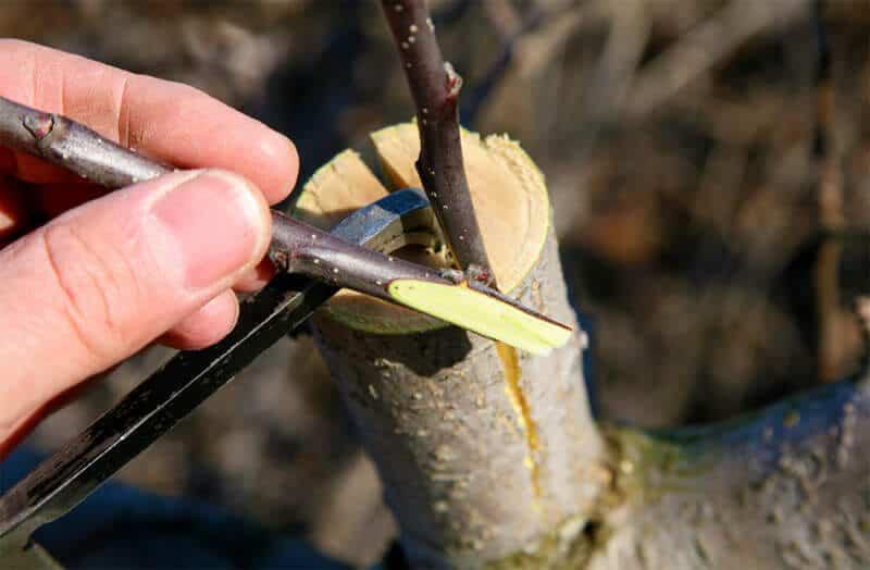 resursele de lemn