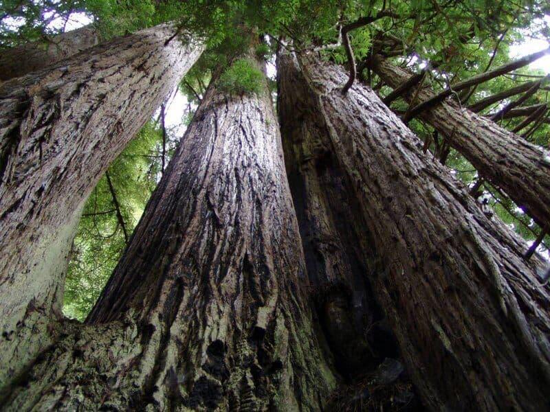 beneficiile lemnului