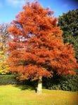 sa plantezi un copac