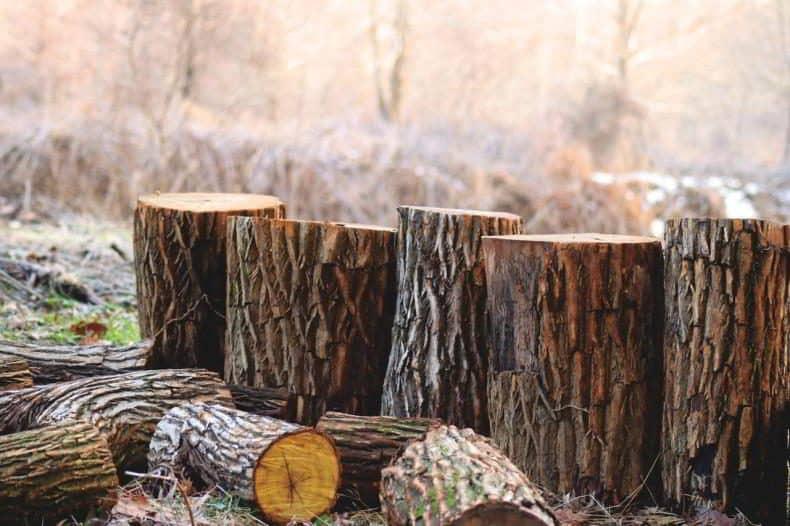 mercantilism pentru lemnul romanesc