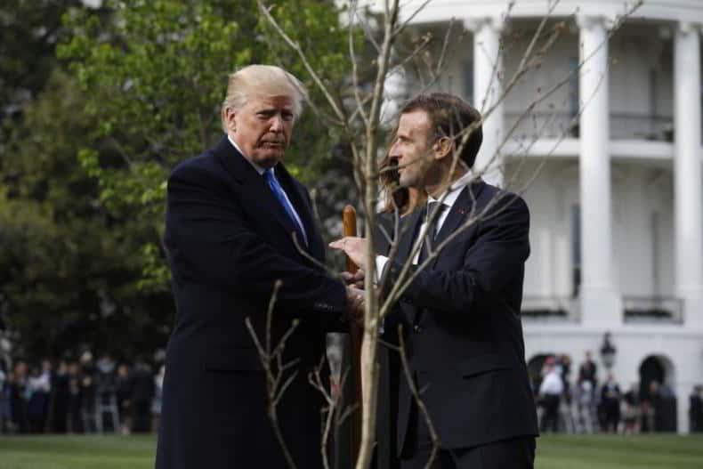 stejarul francez de la Casa Alba