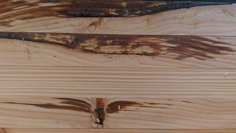 Rasina din lemn de douglas